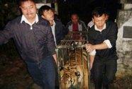Bàn giao 2 con hổ Đông Dương cho đơn vị chăm sóc