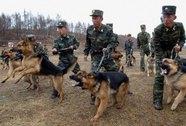 Thực hư chuyện Jang Song Thaek bị xử tử bằng chó săn