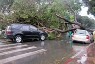 Mưa lớn, cây bật gốc la liệt giữa trung tâm TP HCM