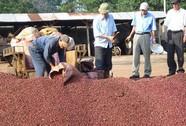 Hủy bỏ nhãn hiệu Cà phê Buôn Ma Thuột của Trung Quốc