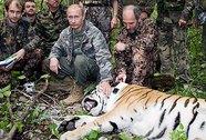 Khu bảo tồn Trung Quốc nửa mừng nửa lo vì hổ do ông Putin thả