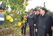 Tỉ phú nông nghiệp công nghệ cao (*): Làm giàu từ cây ngũ quả