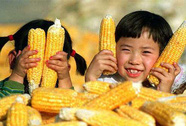 """""""Nông nghiệp yêu nước"""" kiểu Trung Quốc (*): Bại lộ âm mưu"""