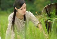 327 phim tham dự LHP Quốc tế Hà Nội lần 3