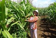 Đồng hành cùng nông dân