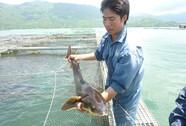 Sản lượng thủy sản tăng