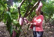 Phát triển cây cacao cần cách nhìn mới