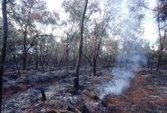 Cháy lớn ở khu rừng phòng hộ 20 năm tuổi