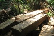 Phát hiện 2 bãi giấu gỗ quý ngay trong rừng đặc dụng