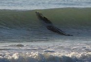 Cá sấu khổng lồ lượn lờ quanh bãi tắm