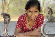 """Cô bé 11 tuổi bị rắn hổ mang """"mê hoặc"""""""
