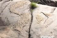 Phát hiện phiến đá nổi lên hình ảnh bản đồ Việt Nam