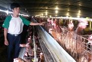 321 con gà có giá… gần 1 tỉ đồng