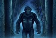 Bí ẩn về dã nhân Bigfoot được làm sáng tỏ