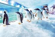 """""""Vua tốc độ"""" Nam Cực đang gây sốt ở Phú Quốc"""
