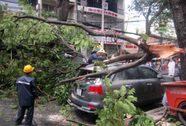 Nhánh cây rơi xuống đường, nhiều người thoát chết trong gang tấc