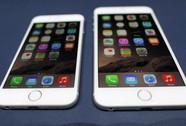 20 iPhone 6 trên 500 triệu đồng chưa kịp bán đã bị bắt
