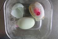 Xôn xao trứng vịt có màu bất thường