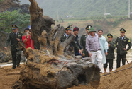 Trục vớt được gốc gỗ sưa nặng 2 tấn