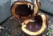 """Vì số """"gỗ thừa"""", phó chủ tịch UBND huyện bị kỷ luật"""