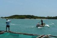 Cá mập xuất hiện ở vịnh Vân Phong