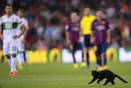 Mèo mun làm loạn Nou Camp