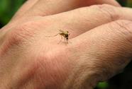 10 phút mỗi tuần phòng chống sốt xuất huyết