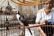 Nhiều người khổ vì chim