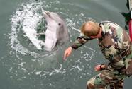 Cá heo sát thủ Mỹ - Nga đối đầu ở Biển Đen