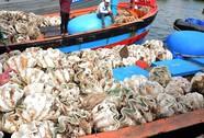 Bị Phạt 80 triệu đồng vì khai thác sò tượng trái phép