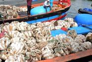 Bắt giữ 20 con sò tượng khai thác trái phép có giá cực sốc