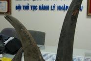 Phát hiện hơn 13 kg sừng tê giác Châu Phi nhập lậu
