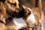 Phòng ngừa chó, mèo gây bệnh cho người