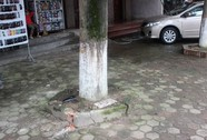 Cố chạy thoát CSGT, tông thẳng vào gốc cây