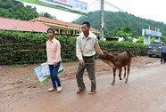 Bill Gates, bò cho người nghèo và thời hạn 100 năm