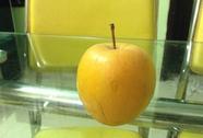 Quả táo để 9 tháng không hỏng