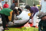 Ngặt nghèo cá ngừ đi Mỹ