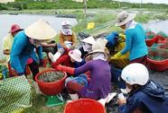 Đau đầu với hàng dỏm và thương lái Trung Quốc