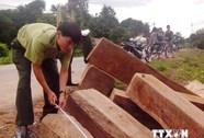 Quảng Trị: Thu giữ gần 5,5m3 gỗ lậu vận chuyển trái phép