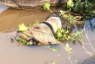 Một xác chết trôi sông, đang trong giai đoạn phân hủy