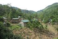Voi rừng hoành hành tại Bắc Trà My
