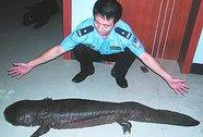 14 cảnh sát Trung Quốc bị phạt vì bữa tiệc kỳ giông