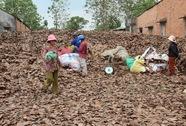 Người dân Đồng Nai đổ xô bán lá điều khô