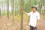 Trồng rừng tiêu chuẩn quốc tế