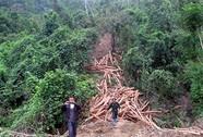 Ngưng cho doanh nghiệp Trung Quốc thuê rừng?