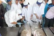 Xuất khẩu cá ngừ đại dương sang Nhật: Chưa đạt hiệu quả như ý