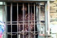 Nhốt con trong chuồng gà 13 năm