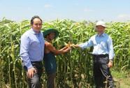 Chuyển đổi cây trồng giúp nông dân thoát nghèo