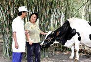 Vinamilk thu mua sữa bò tươi của nông dân tăng gần 22%