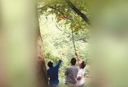 Trung Quốc: Lễ hội bị hủy vì du khách trộm chuông gió